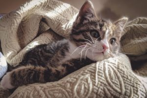 Orthopedic Surgery for Cats With Femur Fractures