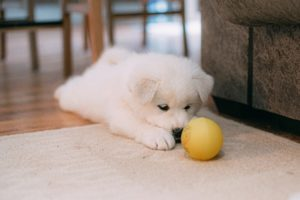 Understanding the Impact of a Fragmented Coronoid Process of the Elbow for Dogs