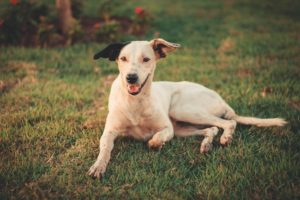 Closed vs. Open Hip Reduction for Dogs