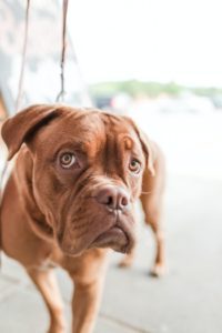 CCL Surgery for Dogs: What is the CCL?